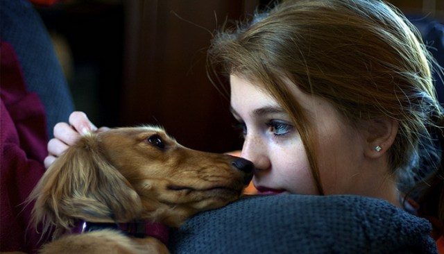 Do Dogs Understand Human Emotions