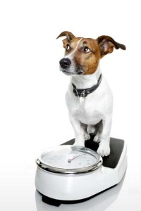 Dog Scale for Overweight Dogs