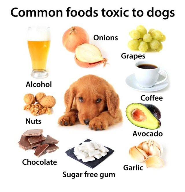 Foods Dogs Should Not Eat - Human Foods That Are Dangerous To Dogs