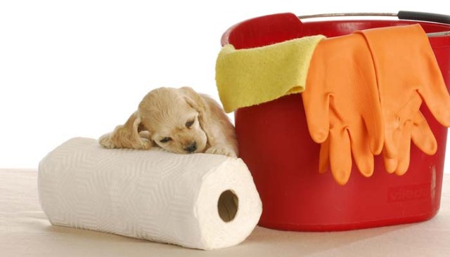 How to Get Dog Urine Smell Out of Carpet When You Have Puppies