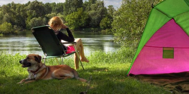 How to Go Camping with Dogs