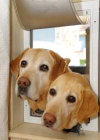 Install Dog Doors