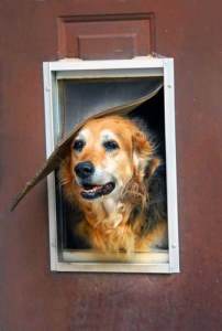 How to Install a Dog Door at Home for Pets