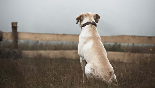 Lost Dogs - How to Cope With Every Dog Owner's Worst Nightmare