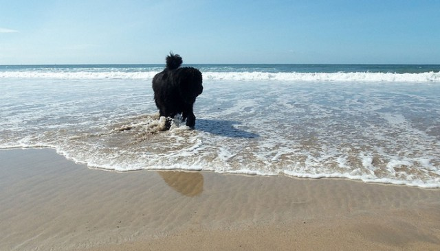 Newfoundland Finds Something Interesting While Walking a Beach in Massachusetts