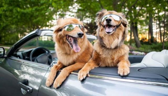 Shipping a Dog via Ground Transport