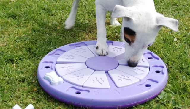 The Importance of Mental Stimulation for Your Dog