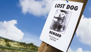 Tips for finding a lost dog