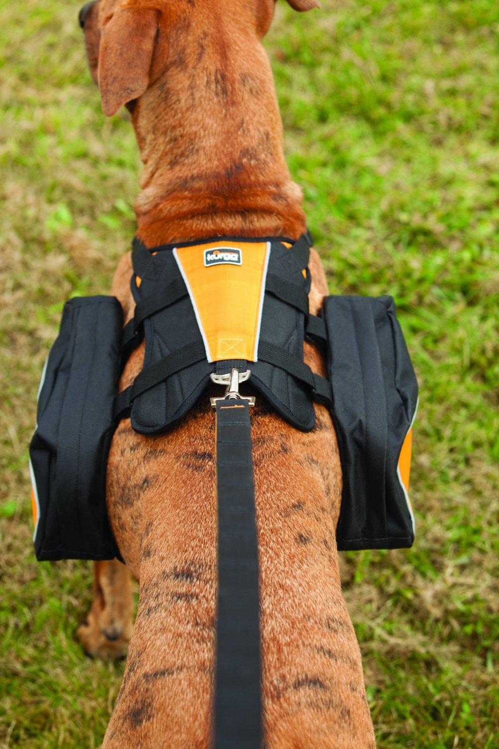 Best Dog Harness Huge Review Of 10 Pet Harnesses For Dogs