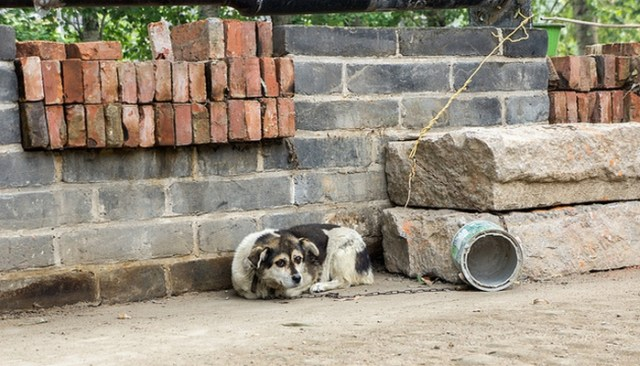 do you know a dog in need of a dog house