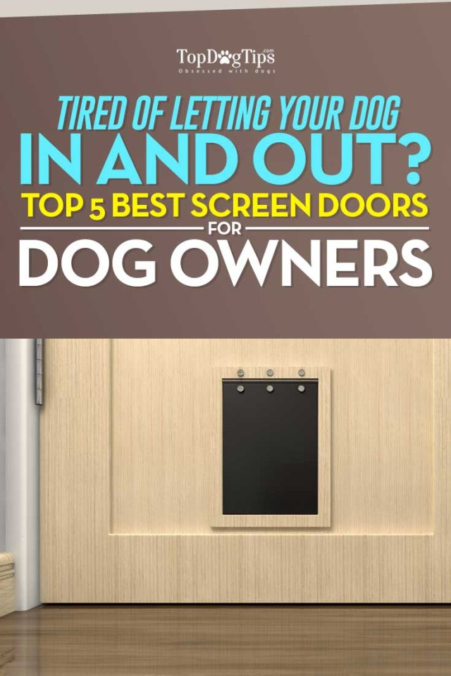 Best Screen Doors with Dog Door to Let Your Dog Out