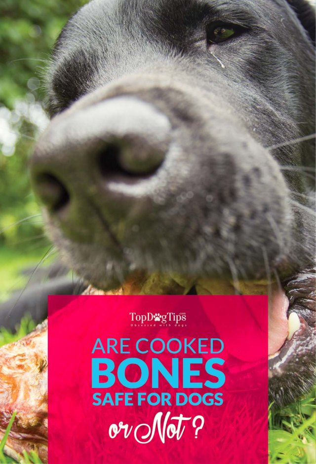 Cooked Bones for Dogs