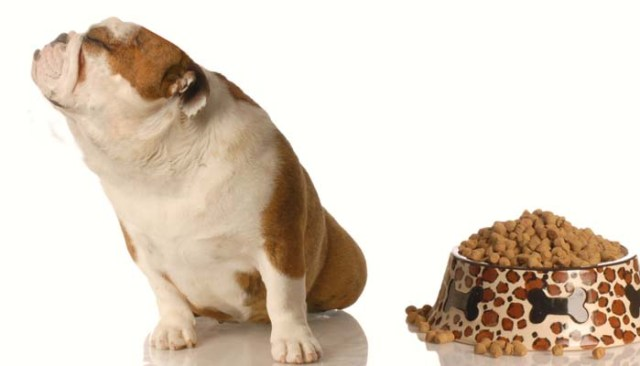 Cost of Owning a Dog and Feeding a Dog