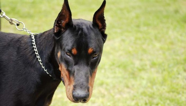 Cynophobia - How to Get Over a Fear of Dogs