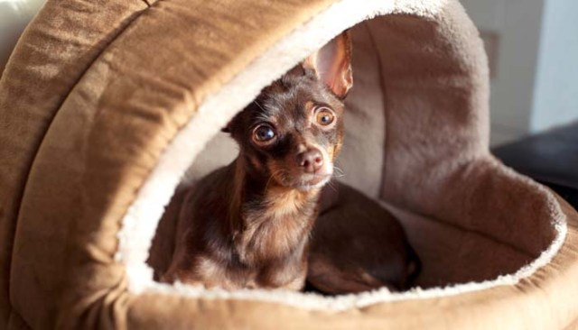 DIY Dog Bed Project - Ideas from Around the Internet for a Dog