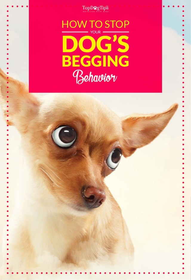 Dog Begging Behavior