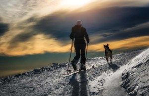 Dog Hiking Gear Must-Haves - What You Need When Hiking with Dogs