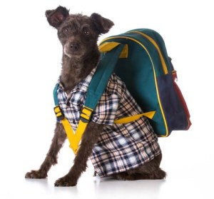 Dog backpacking gear for travel