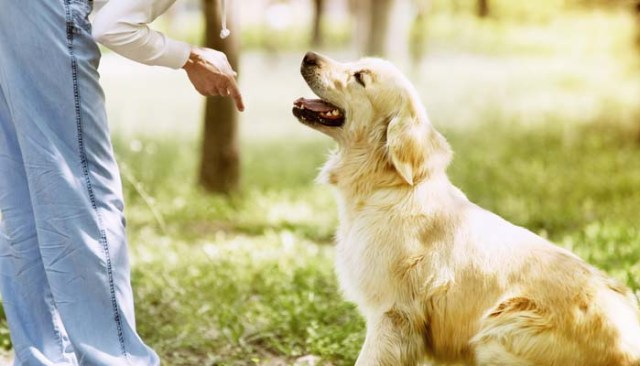 How to Become a Pet Sitter for Dogs and Cats