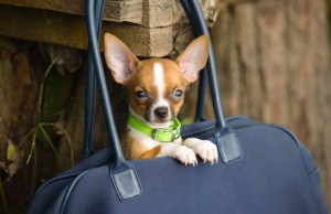 Backpacks to Carry Dogs - How to Bring Your Small Dog Everywhere
