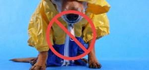 Bad dog winter coat
