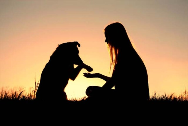 Does My Dog Love Me - How to Read Emotions in Dogs