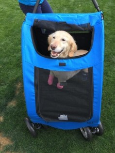 Legless Dog Gets New Leash on Life