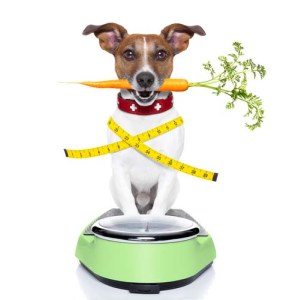 The Risks of Canine Obesity and How To Keep Your Dog Fit 3
