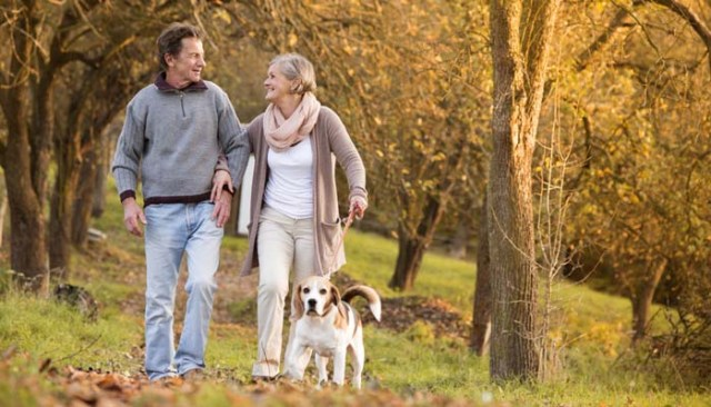 Walking Your Dog - A Guide To Do It Safely 2