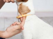 Best Flea Collars for Dogs to Prevent Fleas and Ticks