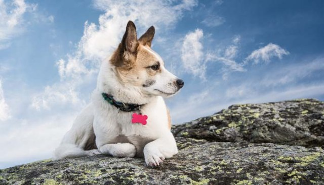 Dog Identification Tags - Buyers Guide