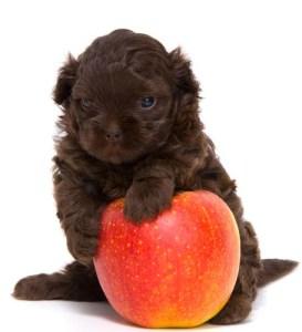 Dog fruits