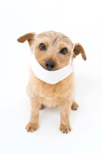 Dog immune to diseases