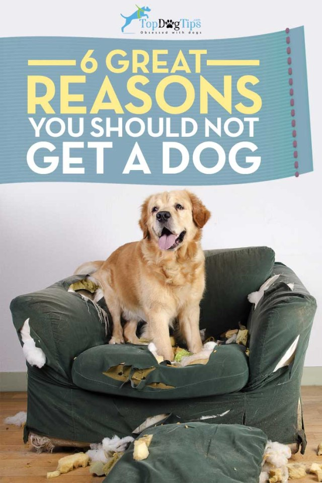 Good Reasons NOT to Get a Dog