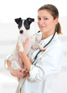 Holistic Dog Health Medicine