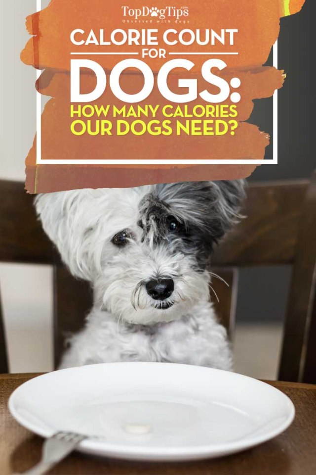 How Many Calories A Dog Needs Per Day