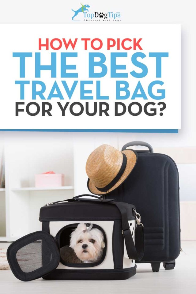 How to Choose the Best Dog Travel Bags