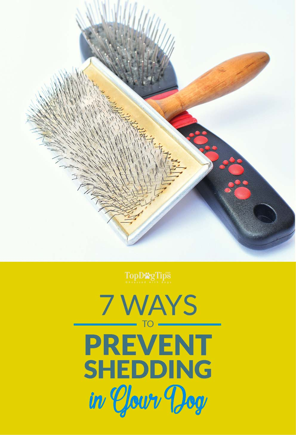 9 Tips on How to Prevent Shedding in Dogs and Keep Dog