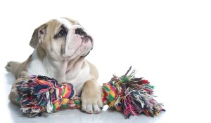 Most Unsafe Dog Toys for Puppies