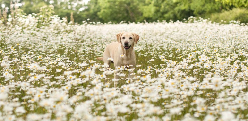 Details on Holistic and Natural Dog Health Approaches