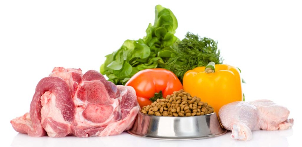 The Most Important Dog Food Ingredients