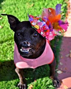 This Pit Bull Lost Her Nose...Guess What Happens Next