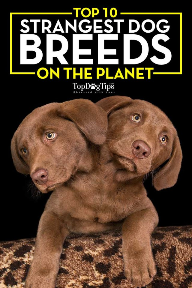 10 of the Strangest Dog Breeds on the Planet