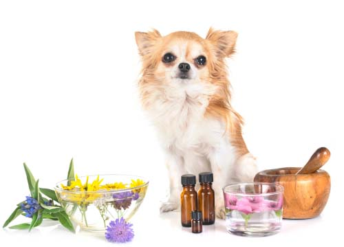 8 Proven Home Remedies for Dog's Kennel Cough