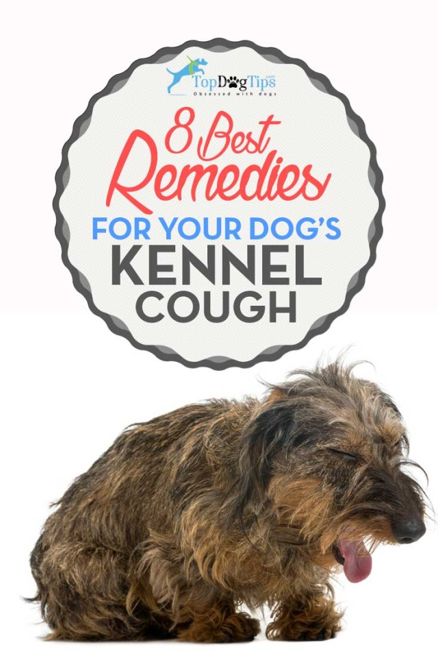 Best Home Remedies for Canine Kennel Cough