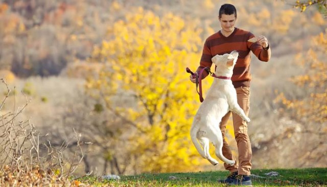 Builds a bond between you and your dog - Reasons to Leash Your Dog