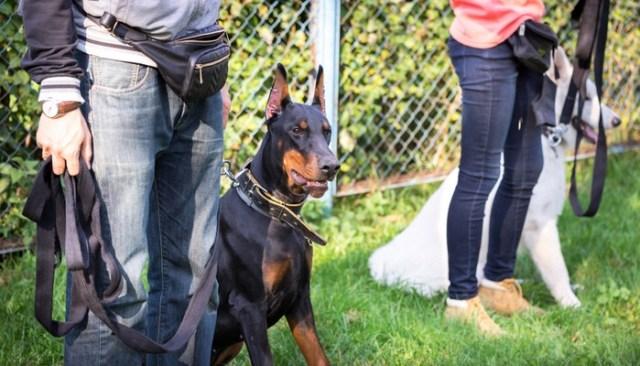 Dog Training Tips From Dr. Robert Mugford