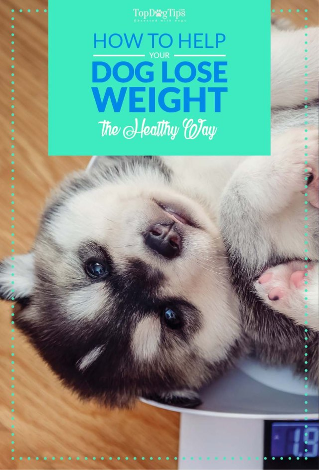 Helping Your Overweight Dog Lose Weight