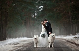 Including Your Dog In Your Wedding