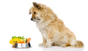 Most Healthy Dog Food Brands (USDA Organic Certified)